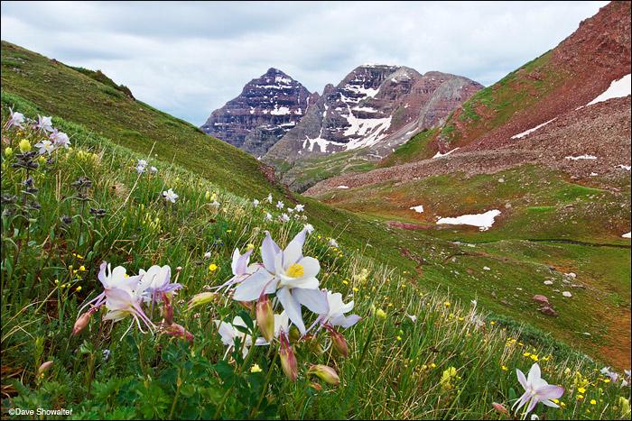 columbine, north maroon peak, photo