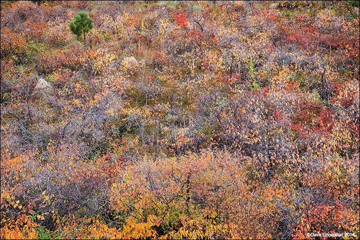autumn, foothills, photo