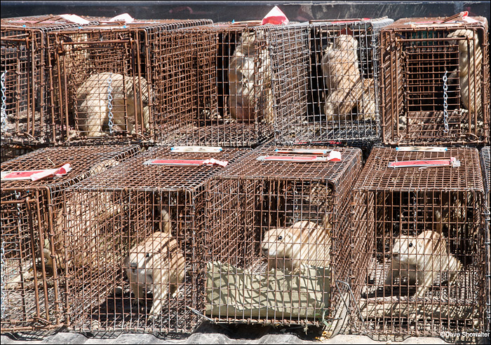 prairie dogs, usfs, relocation, photo