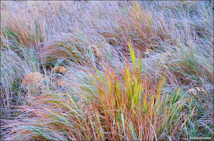 native grasses, Moraine Park, Rocky Mountain National Park, photo