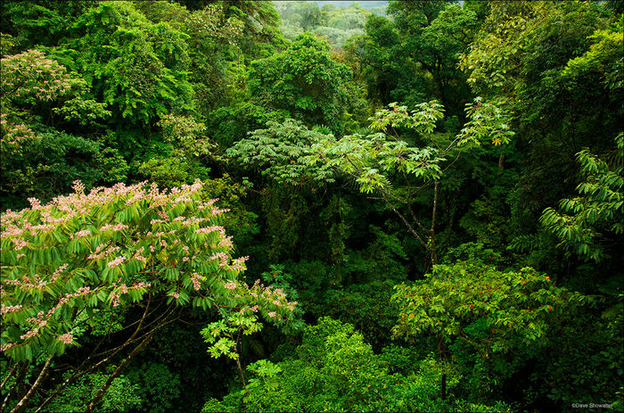 What is the Forest Canopy? - wiseGEEK: clear answers for common