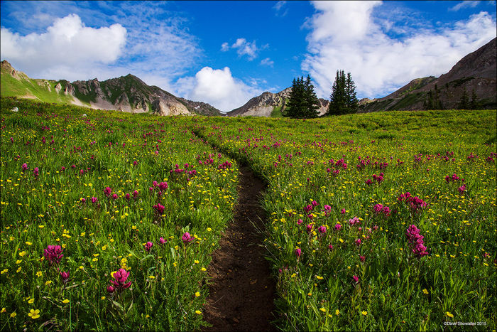 wildflowers, Capitol Peak