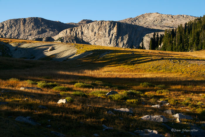 Bridger Teton National Forest, alpine meadow, photo