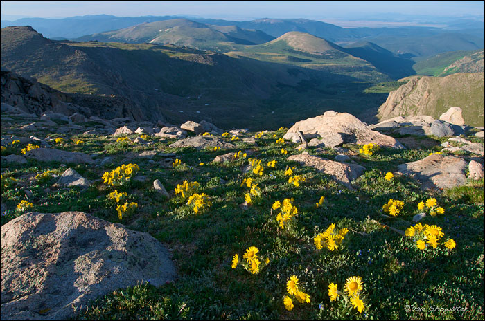 old man of the mountains, Mount Logan, Mount Evans Wildernes, photo