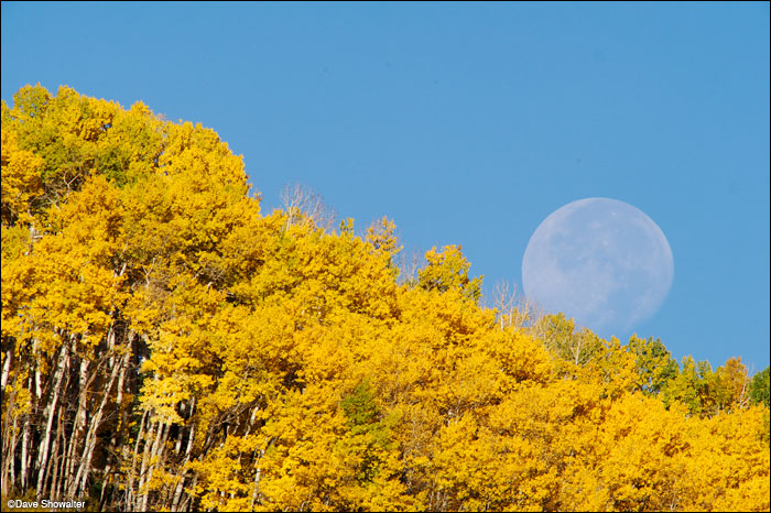 The October moon sets behind an autumn aspen forest near Telluride, almost looking like a ball rolling downhill. A 600mm...