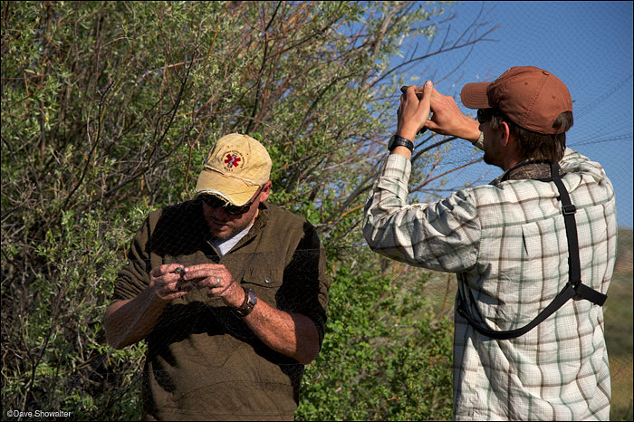 Ian Abernethy and Dusty Downy remove songbirds from a mist net at the Audubon Rockies bioblitz.