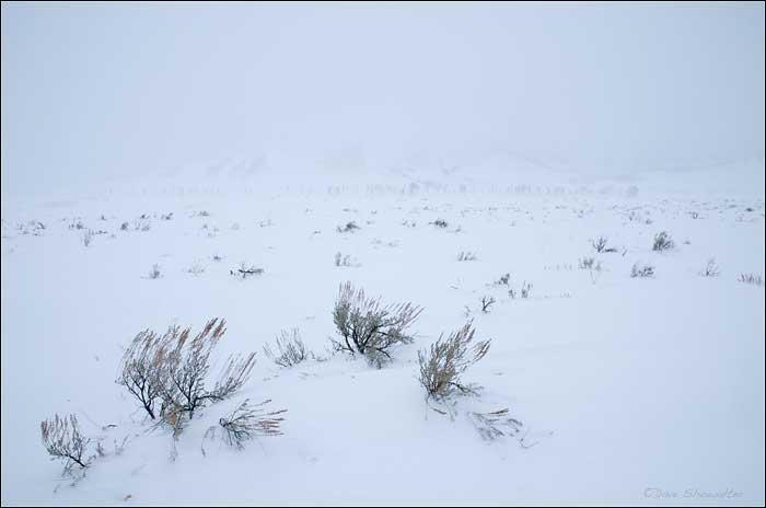 sage flats, Grand Teton National Park, WY, photo