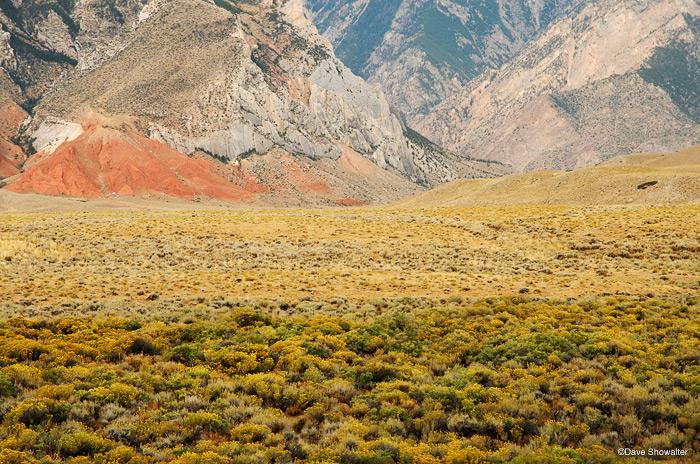 clark's fork canyon, rabbitbrush, photo