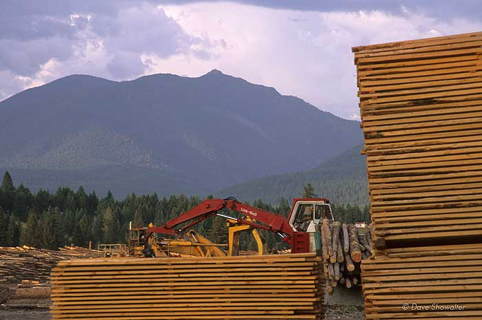 logging, Glacier National Park, photo