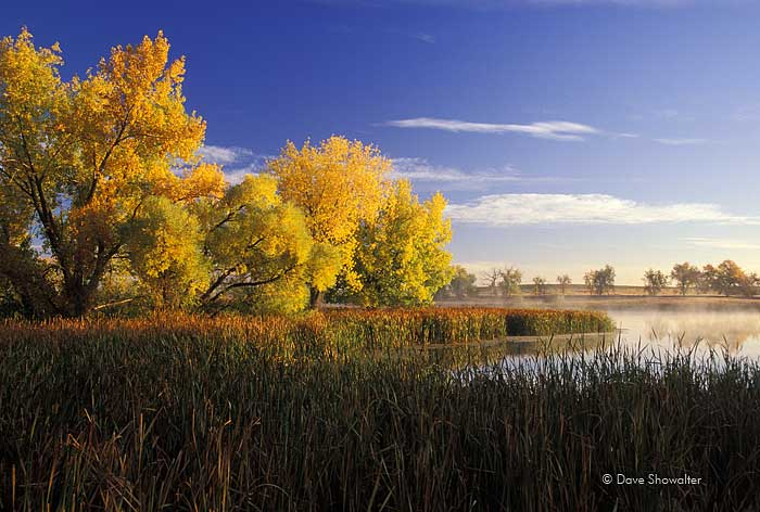 Blazing cottonwoods at peak autumn color along the shoreline of Lake Ladora one October morning. A large print of this photograph...