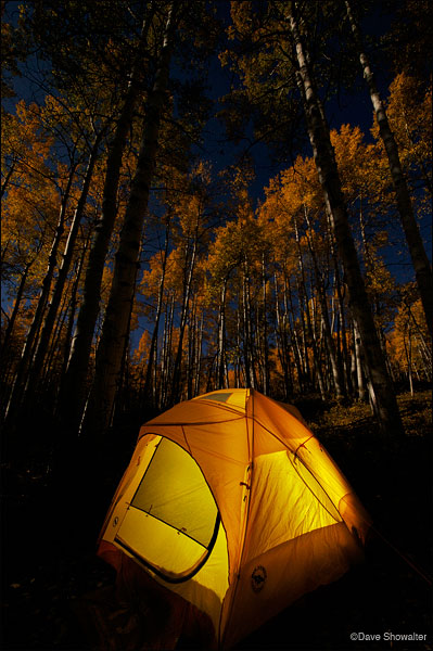 aspen forest, full moon, kebler pass, photo