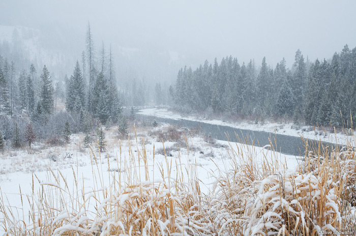 Grasses along the banks of the North Fork Of The Shoshone River still hold their autumn color during an early season snowstorm...
