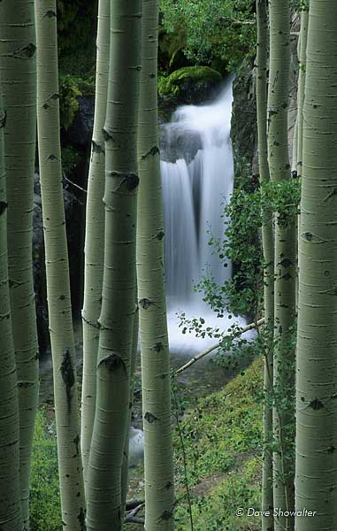 A small waterfall on Nellie Creek, viewed through aspen trees from the 4WD road to Uncompahgre Peak trailhead.