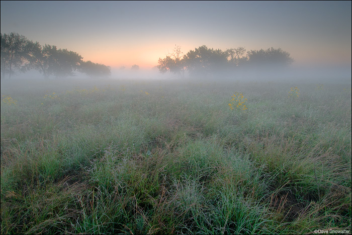 Lush late summer prairie grasses are the cool foreground for this foggy summer scene near Lake Ladora.