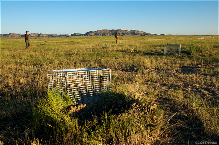 Kristy Bly of World Wildlife Fund and Lindsey Sterling-Krank of HSUS walk the Thunder Basin relocation site. The black-...