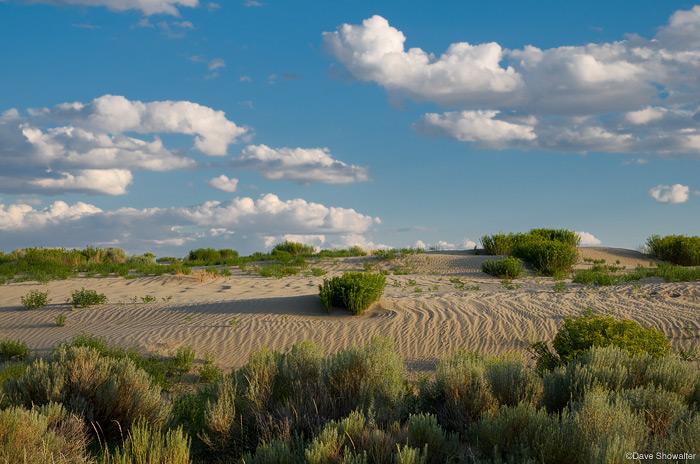 killpecker sand dunes, northern red desert, photo