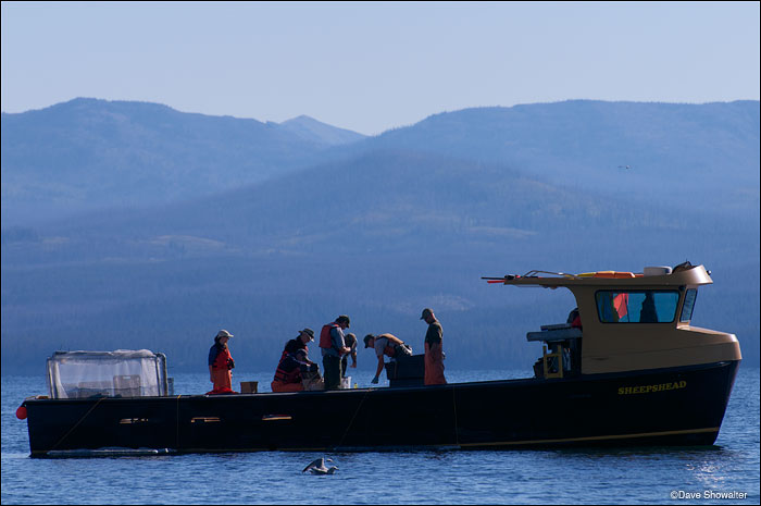 sheepshead fishing boat, yellowstone lake, lake trout removal, photo