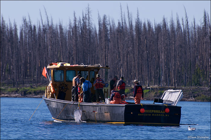 yellowstone lake, lake trout removal, photo