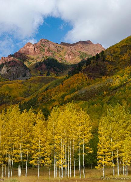 golden aspen, Maroon Bells-Snowmass Wilderness Area, CO, photo