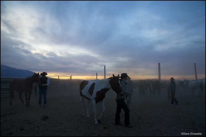 rancher, bison, photo