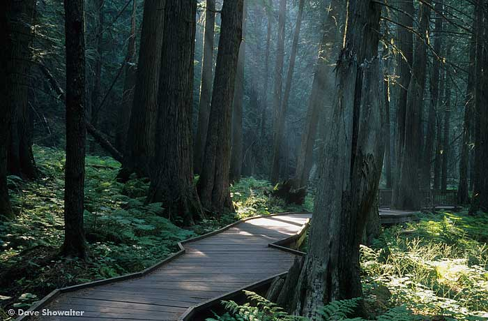 Trail of the Cedars, Glacier National Park, photo