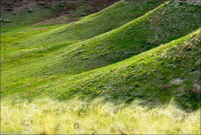 Wind-blown needle and thread grass contrast with rich green shale hills in Comanche National Grassland near LaJunta.