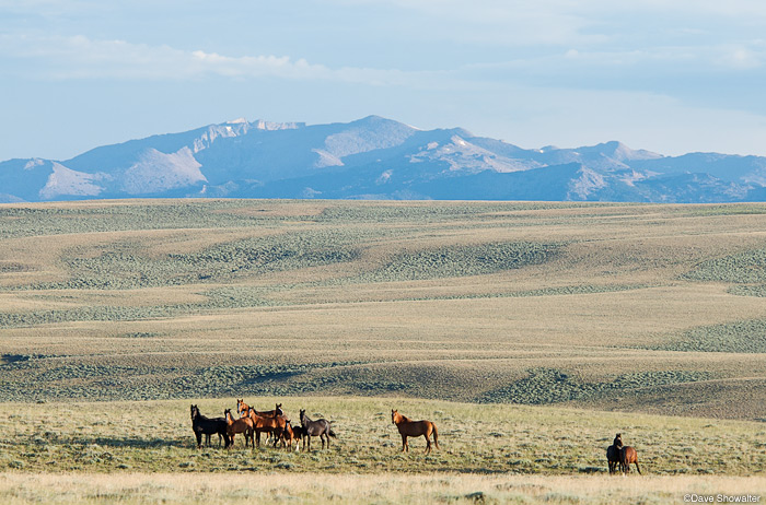 feral horses, jack morrow hills, wind river range, photo