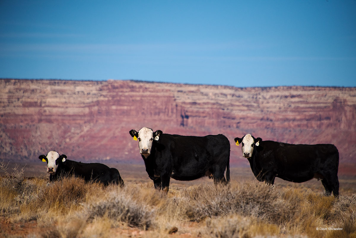 In the buildup toBears Ears NationalMonument getting reduced by the Trump administration on December 4, 2017...