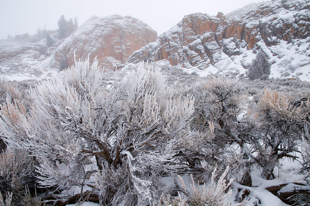 Hartman's Rocks, Gunnison Basin, Colorado, big wyoming sagebrush, photo