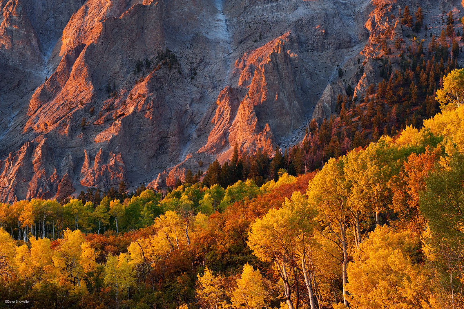 marcellina mountain, aspen forest, photo