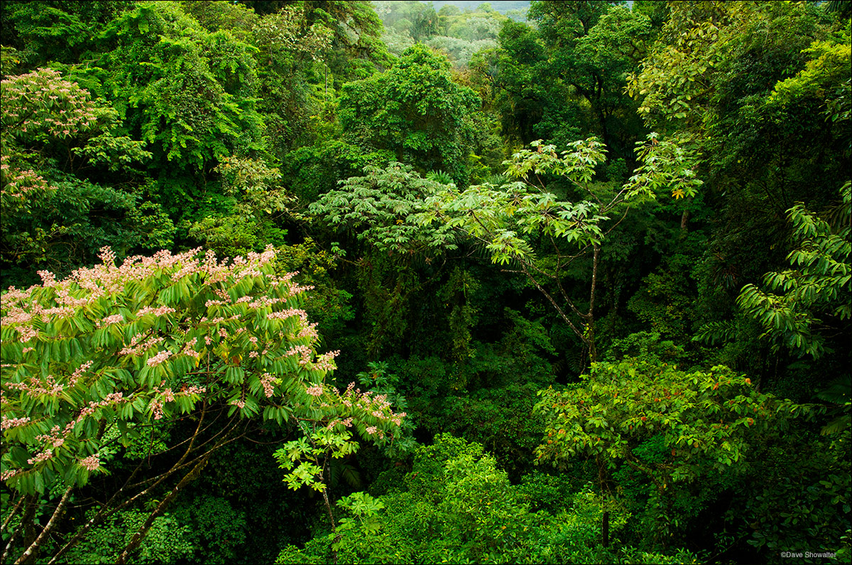 Rainforest Canopy & Rainforest Canopy | Near La Fortuna Costa Rica | Dave Showalter ...