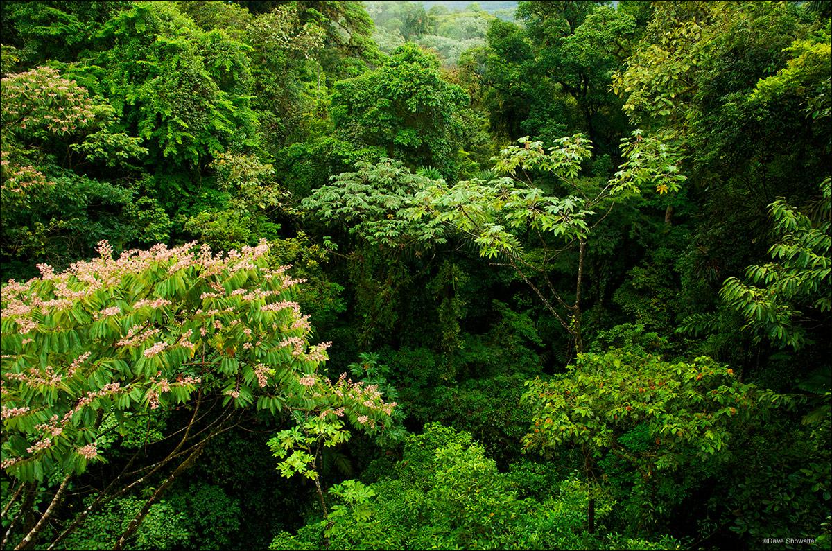 canopy tours, rainforest, photo
