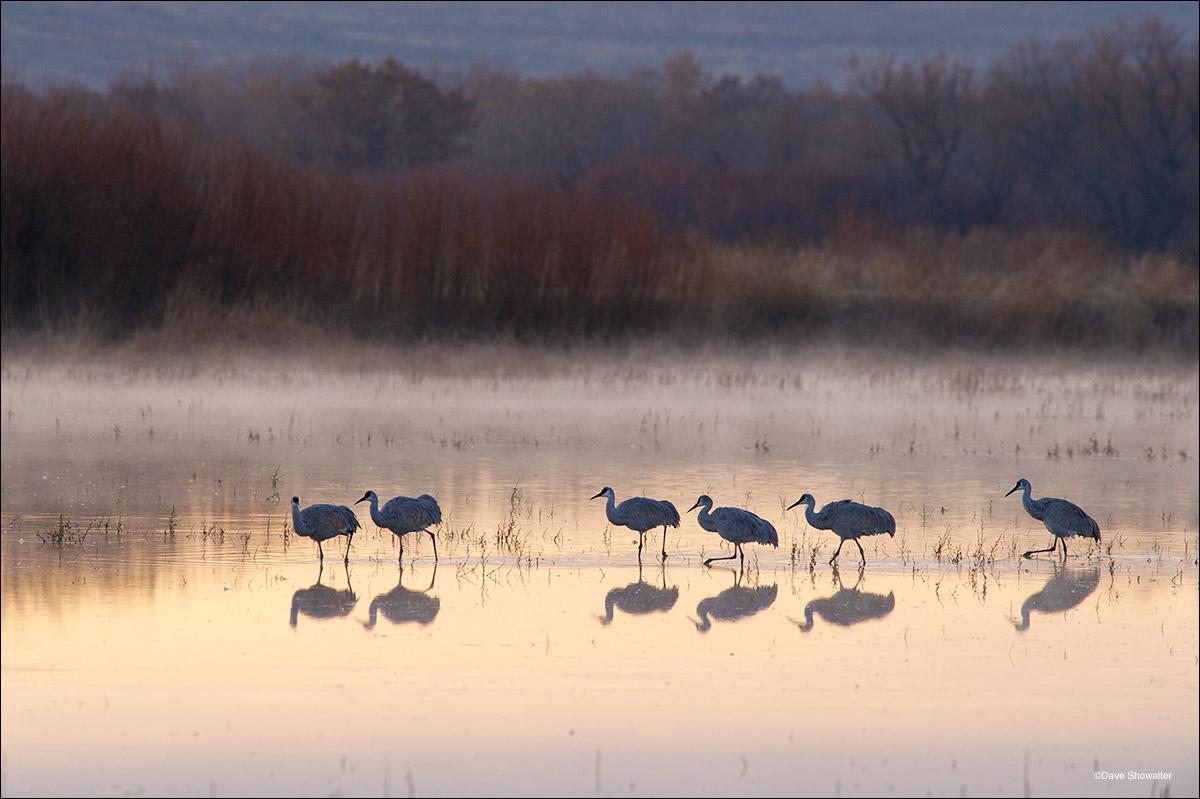 bosque del apache, sandhill cranes, photo