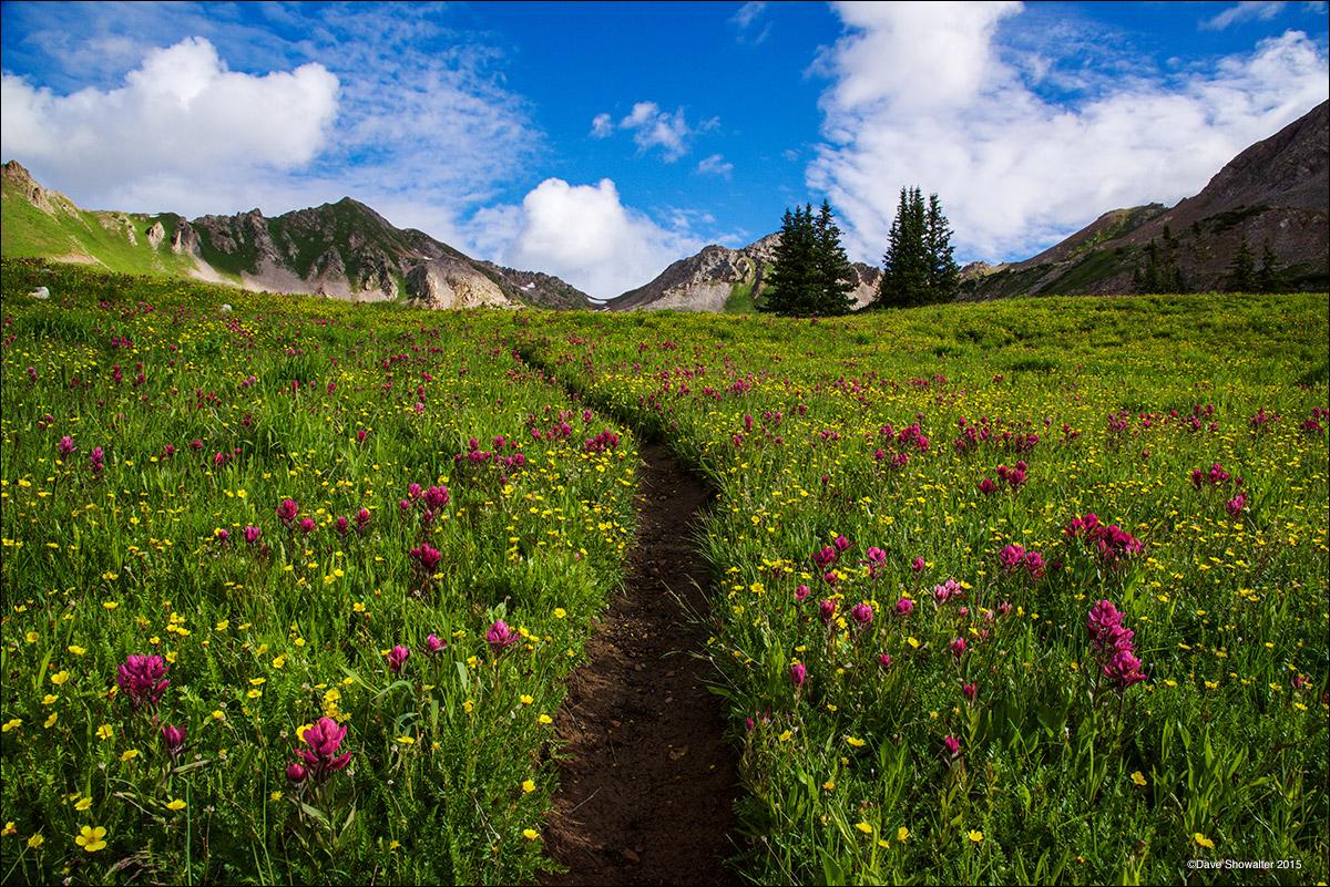 wildflowers, Capitol Peak, photo