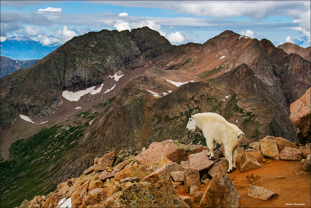 mountain goat, Mount Eolus, Chicago Basin, Weminuche Wilderness, photo